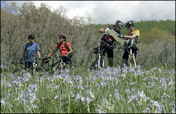 mountain-bikers